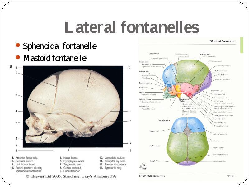 General data about cranium